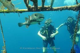 Caribbean Sea Sports