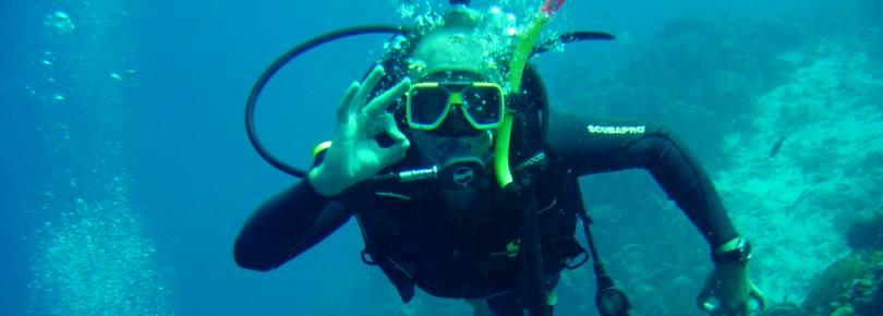 Duiker is aan het duiken in Curacao