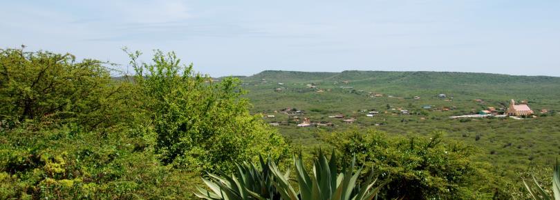 Natuur van Curacao - Flora en Fauna