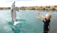 Assistant Dolphin Trainer