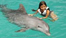 Dolphin Swim