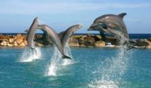 Dolphins-In-Depth